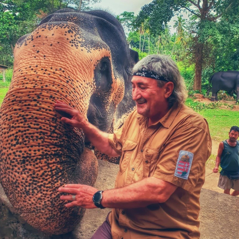 indiai elefánt sri lanka