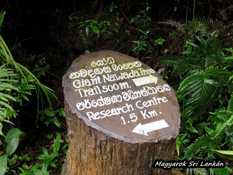 esőerdő sri lanka sinharaja