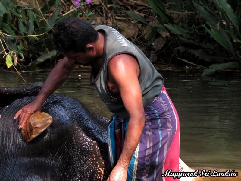 pinnawala elefánt fürdetés sr lanka