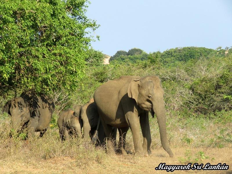 elefánt nemzeti park minneriya