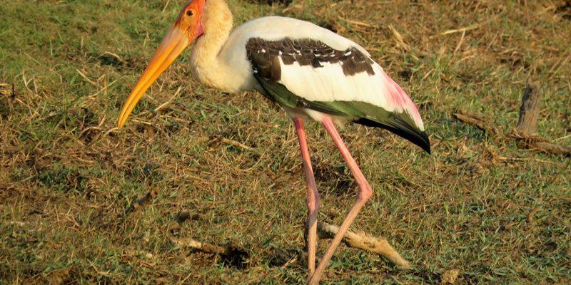 yala nemzeti park