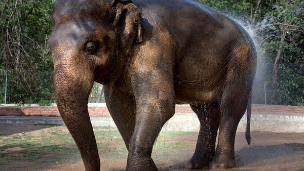 sri lanka elefánt
